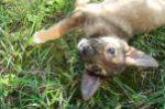 Малыш Собака 1,5 мес.