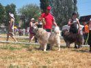 Предлагаем для вязки титулованного кобеля кавказской овчарки