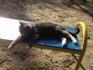 Нашлась серая кошка