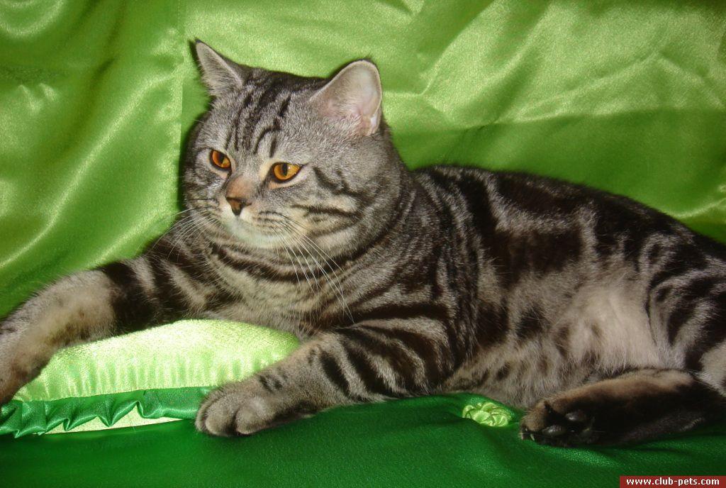 Найти кота для вязки киев