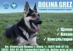 Племенной питомник Восточно-Европейской овчарки:Dolina grez:предлагает щенков
