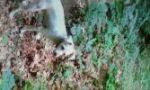 пропала китайская хохлатая (стриженый пуховик)