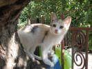 Отдам котенка: трехмастная кошечка, 3 мес