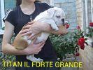 мальчик имя TITAN IL FORTE GRANDE 15.03.2015 г.рождения