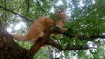 Пропал рыжий котенок