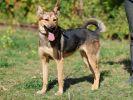Жаннет, стерилизованная собака.