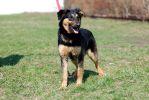 Динара, четырехмесячный щенок.