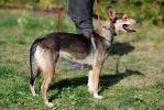 Ильда, небольшая собачка, стерилизована.