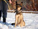 Зита, стерилизованная собака среднего размера.