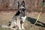 Пунш, десятимесячный собакин