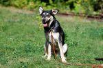 Акварелька, полуторагодовалая стерилизованная собака.