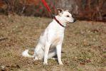 Нора, трехлетняя стерилизованная собака.