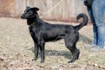 Нярма, годовалая стерилизованная собака.