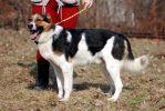 Леон, годовалый крупный пес.