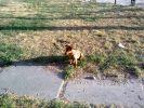 Пропала собака.