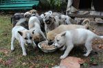 Симпатичные щенята
