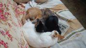 Муся и ее котята