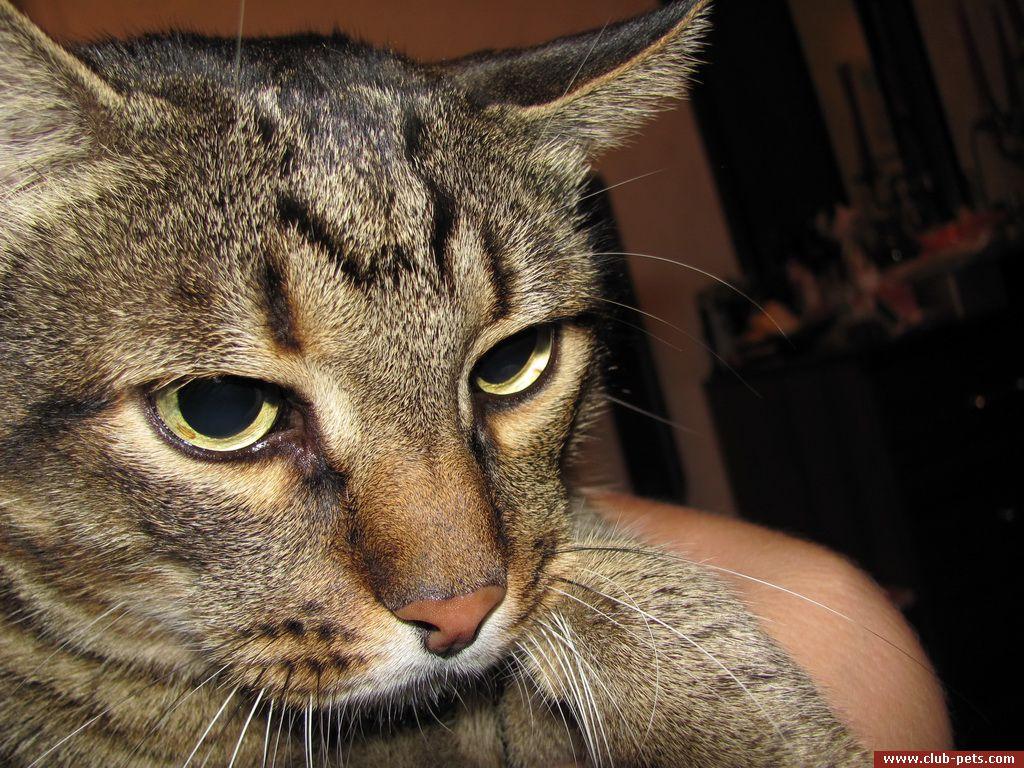 У меня есть кот тимка