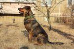 Славный пес надеется обрести новую семью