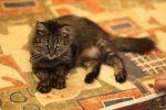 Молоденькая красивая кошечка в поисках любящих хозяев!